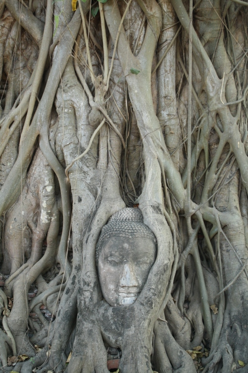 Ayutthaya, buddha head in tree roots